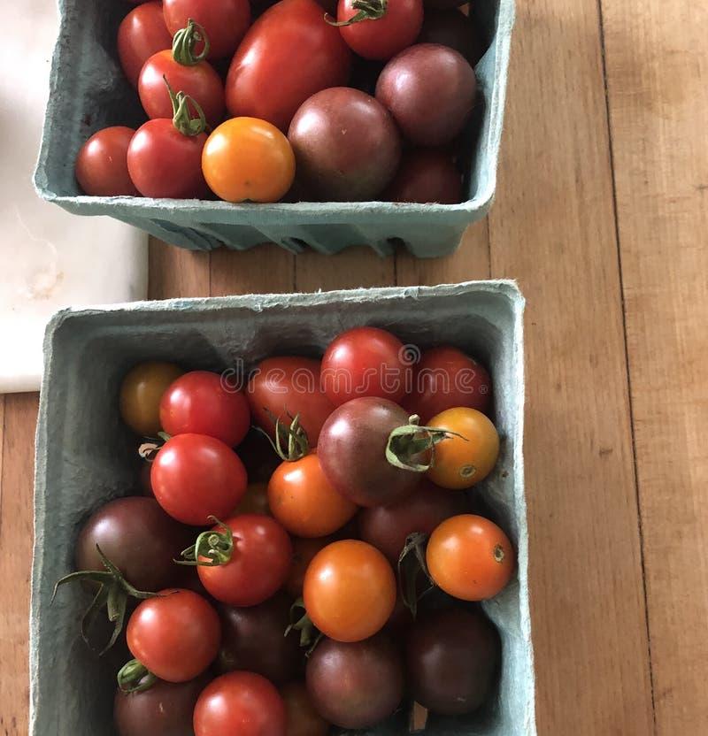 Csa för körsbärsröda tomater royaltyfri fotografi