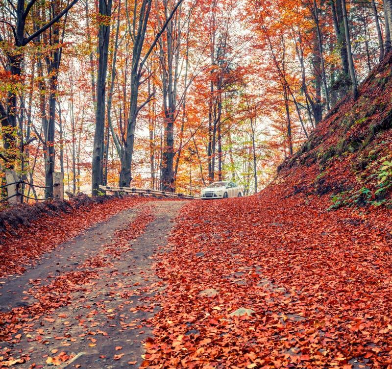 Csene variopinto di autunno nella vista pittoresca in montagne carpatiche, Ucraina, Europa di mattina della foresta della montagn fotografia stock libera da diritti