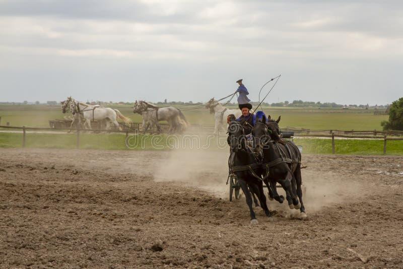 Csikos Hongaarse equestrians die stunts uitvoeren stock afbeeldingen
