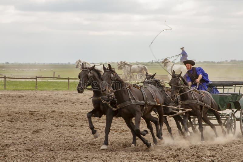 Csikos Hongaarse equestrians die veelvoudige stunts uitvoeren stock foto