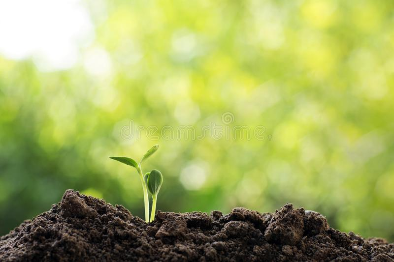 Csr earth ecology environment save world concept. Beginning new life idea concept , newborn small green plants growing sprout with beautiful natural bright stock images