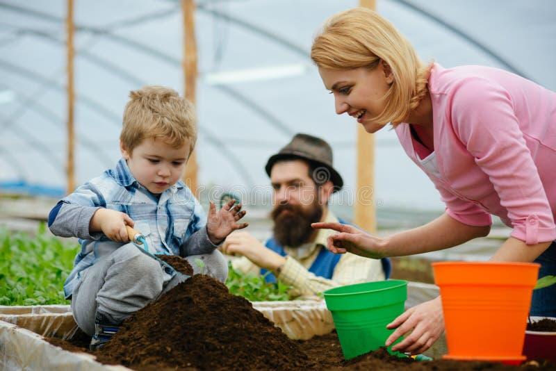 Csr met mensen CSR-concept familie in greenhouse do csr activiteit mensen die samen planten csr activiteit met mensen stock afbeelding
