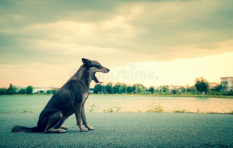 CThaihond die op weg bij park geeuwen stock afbeelding