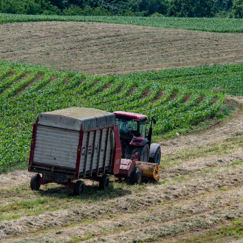 Cuadrado - granjero de lechería que cosecha el heno fotografía de archivo