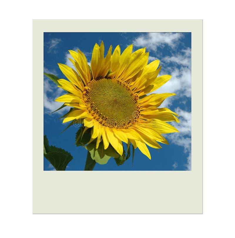 Cuadro con el girasol y el cielo azul fotos de archivo