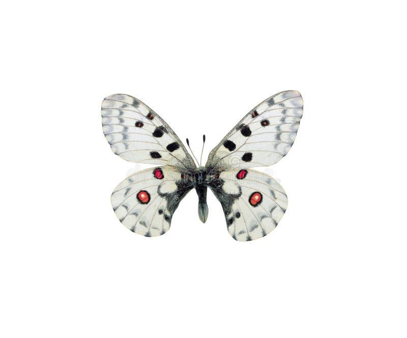 Cuadro de la mariposa fotos de archivo