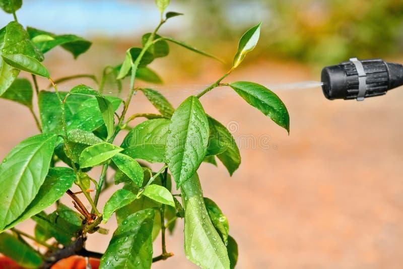 Cuadro del aerosol y hojas que pintan (con vaporizador) del pequeño árbol imagen de archivo libre de regalías