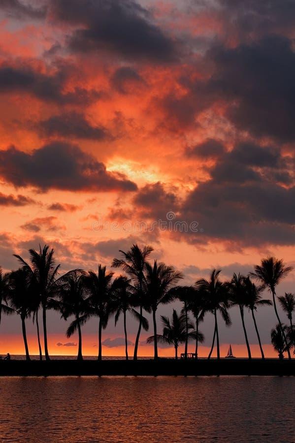 Cuadro tropical de la puesta del sol foto de archivo