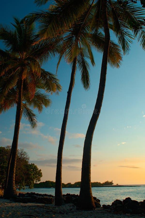 Cuadro tropical de la puesta del sol imagen de archivo libre de regalías