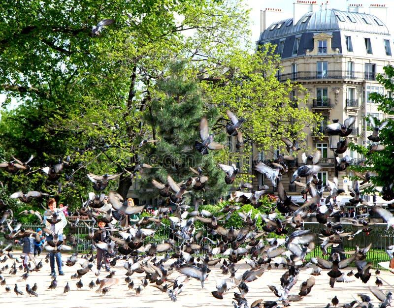 Cuando en París una paloma de pájaros foto de archivo