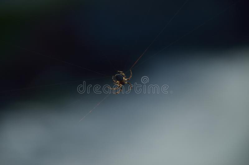 Cuando una araña intenta construir su telaraña fotografía de archivo