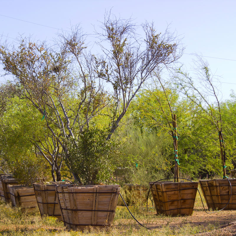 Cuarto de niños de árboles del desierto imagenes de archivo