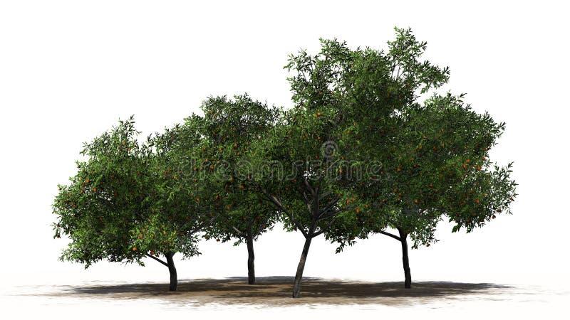 Cuatro árboles de melocotón con las frutas - separadas en el fondo blanco fotos de archivo libres de regalías