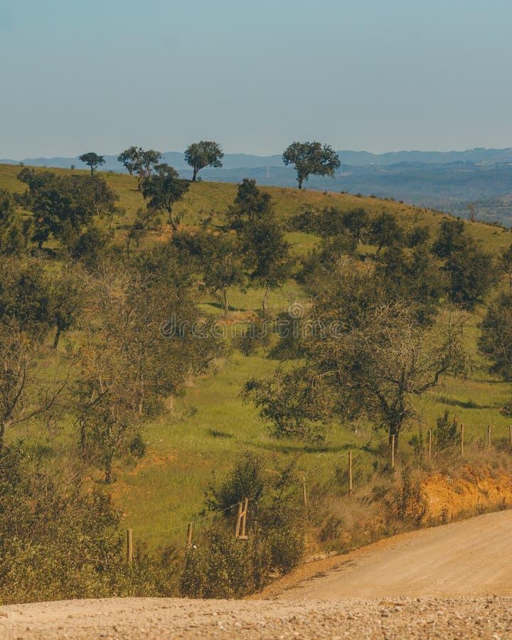 Cuatro árboles en la cima de la colina imagen de archivo
