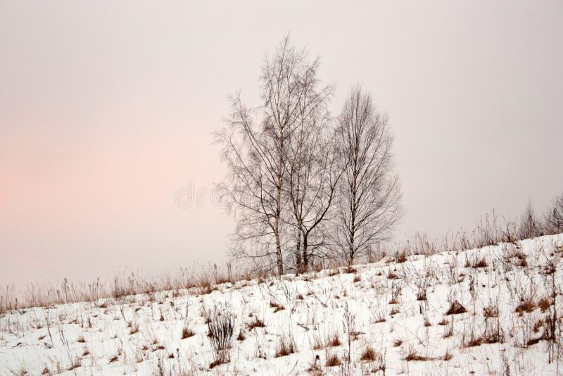 Cuatro árboles en nieves acumulada por la ventisca en la colina imágenes de archivo libres de regalías