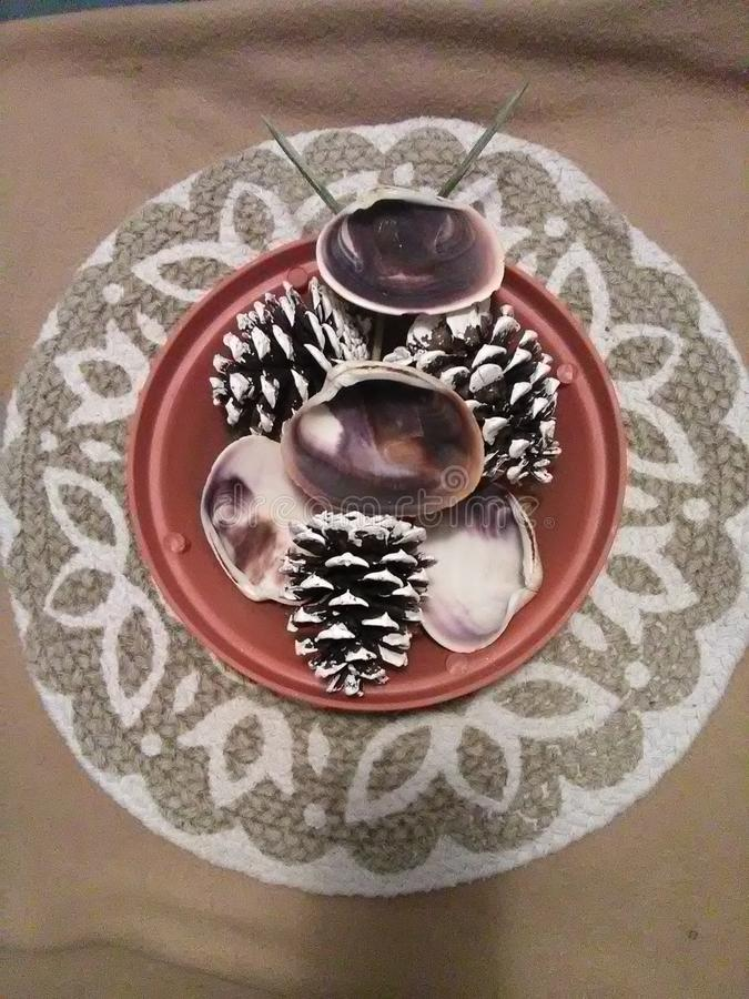 Cuatro cáscaras de la almeja y tres conos del pino en un plantador imágenes de archivo libres de regalías