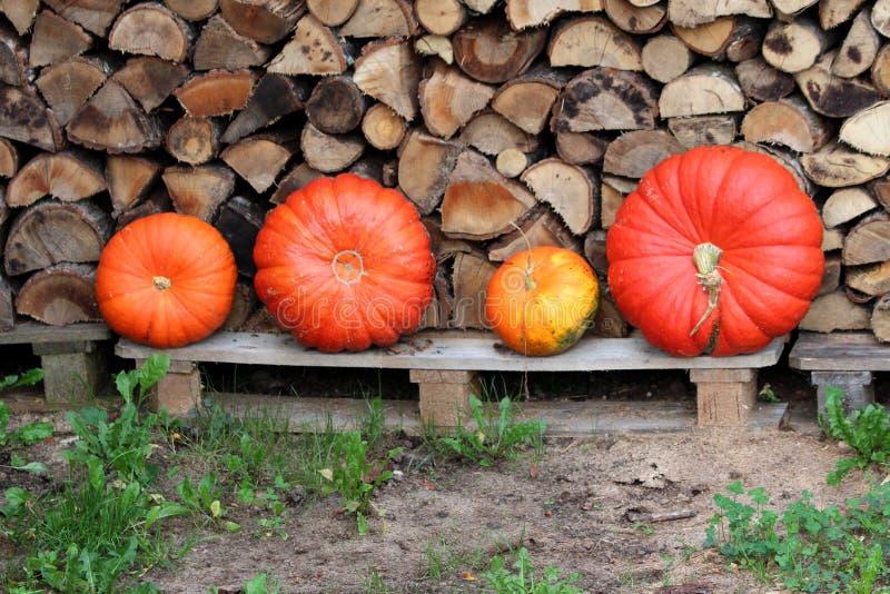 Cuatro calabazas coloridas de los diversos tamaños dejadas delante de la leña apilada preparada por los días de invierno fríos ro imagen de archivo