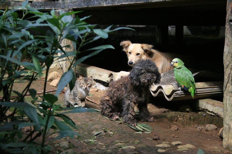 Cuatro compinches de la selva fotografía de archivo