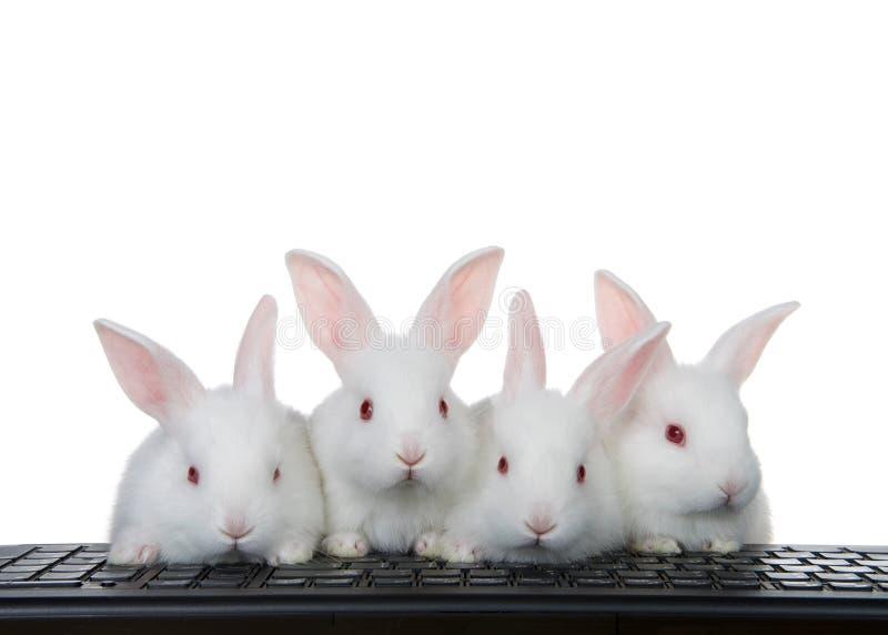 Cuatro conejitos del bebé en el teclado de ordenador aislado en blanco fotos de archivo libres de regalías