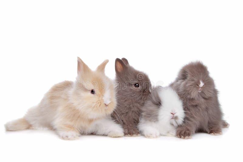 Cuatro conejos jovenes en una fila imagen de archivo libre de regalías