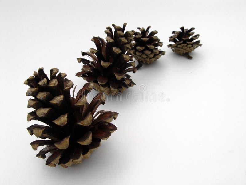 Cuatro conos del pino fotos de archivo