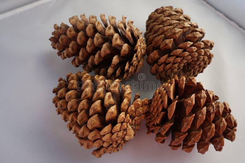 Cuatro conos del pino en un fondo blanco imagenes de archivo