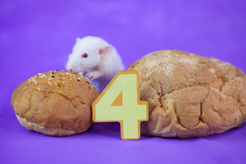 Cuatro dígitos rat?n decorativo hogar de la rata S?mbolo del foto de archivo libre de regalías