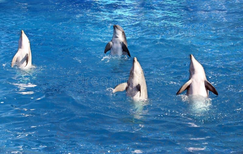 Cuatro delfínes fotos de archivo
