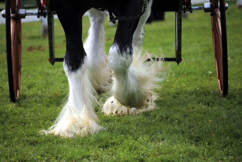Cuatro enganches del caballo con las ruedas del carro imágenes de archivo libres de regalías