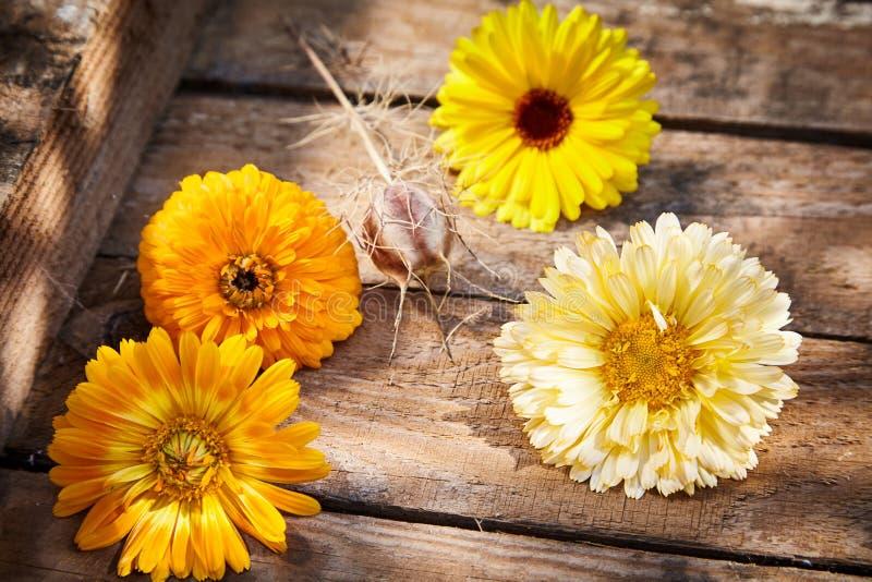 Cuatro flores amarillas y anaranjadas coloridas de la primavera imagen de archivo libre de regalías