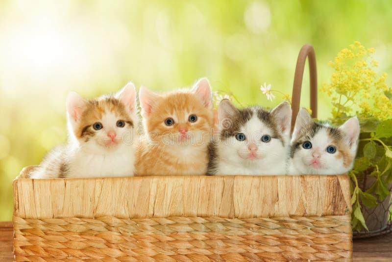Cuatro gatitos en una cesta fotos de archivo