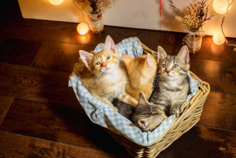 Cuatro gatitos en una cesta edad 1 mes foto de archivo libre de regalías