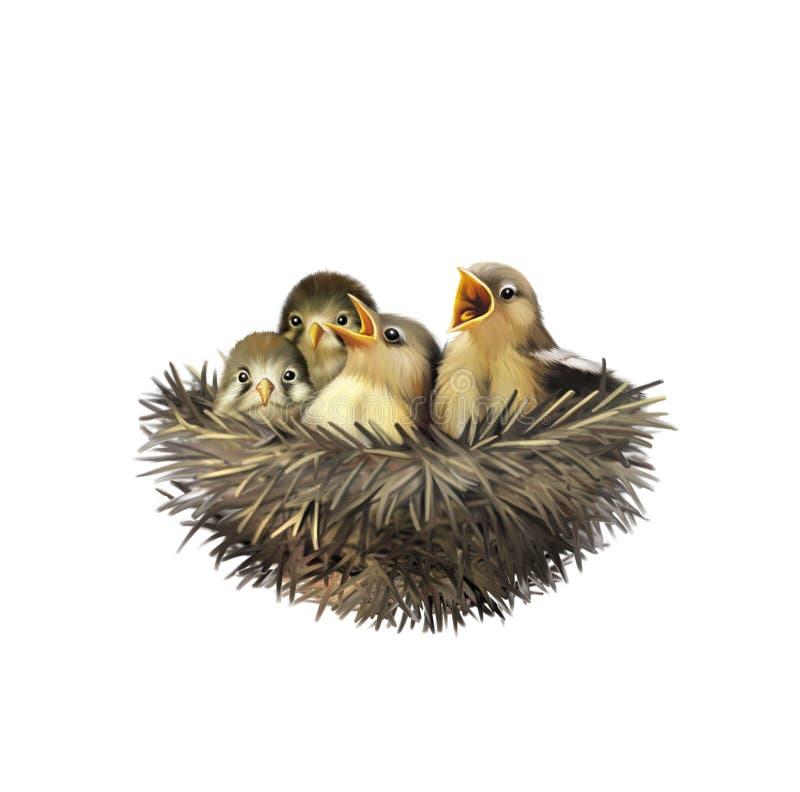 Cuatro gorriones hambrientos del bebé en una jerarquía stock de ilustración