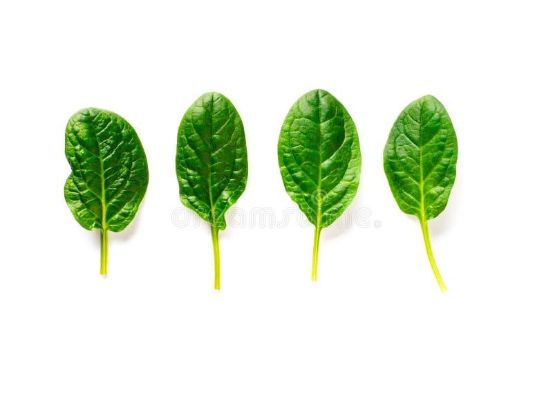 Cuatro hojas de la espinaca del bebé aisladas en blanco imágenes de archivo libres de regalías