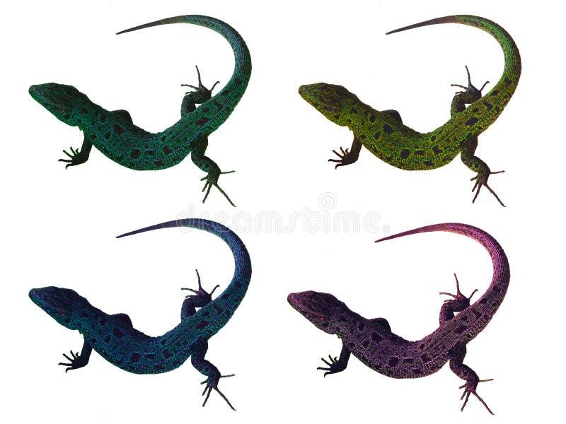 Cuatro lagartos fotos de archivo