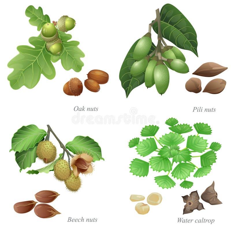 Cuatro nueces con la planta y los corazones pelados stock de ilustración