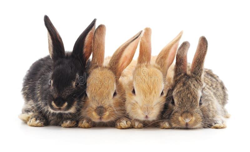 Cuatro pequeños conejos fotos de archivo
