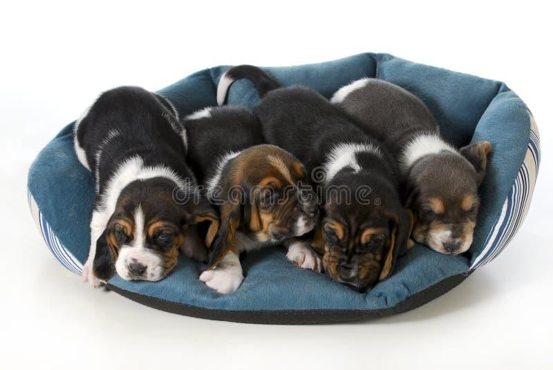 Cuatro perritos imagen de archivo libre de regalías