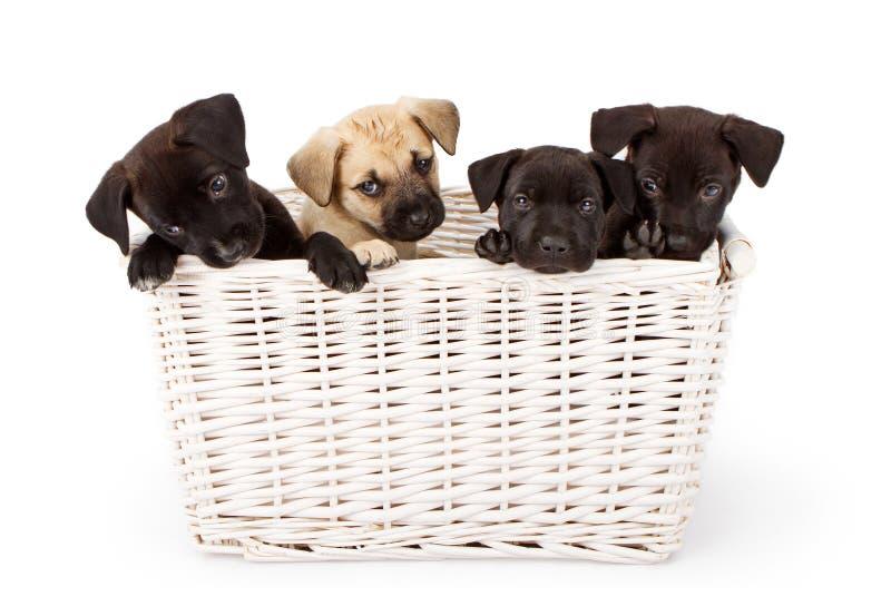 Cuatro perritos en una cesta imágenes de archivo libres de regalías