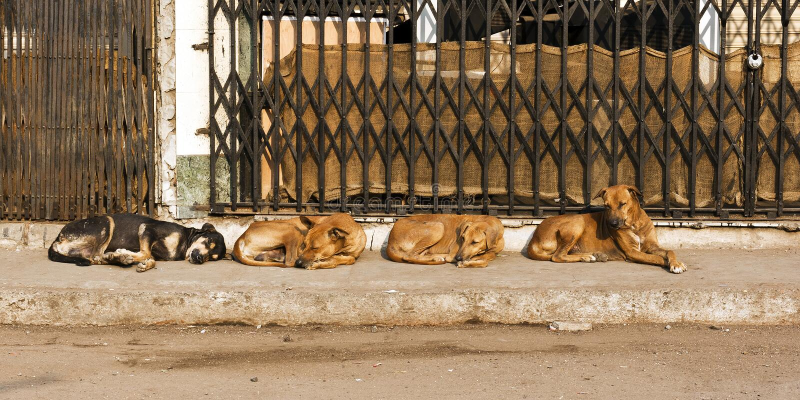 Cuatro perros de la calle foto de archivo libre de regalías