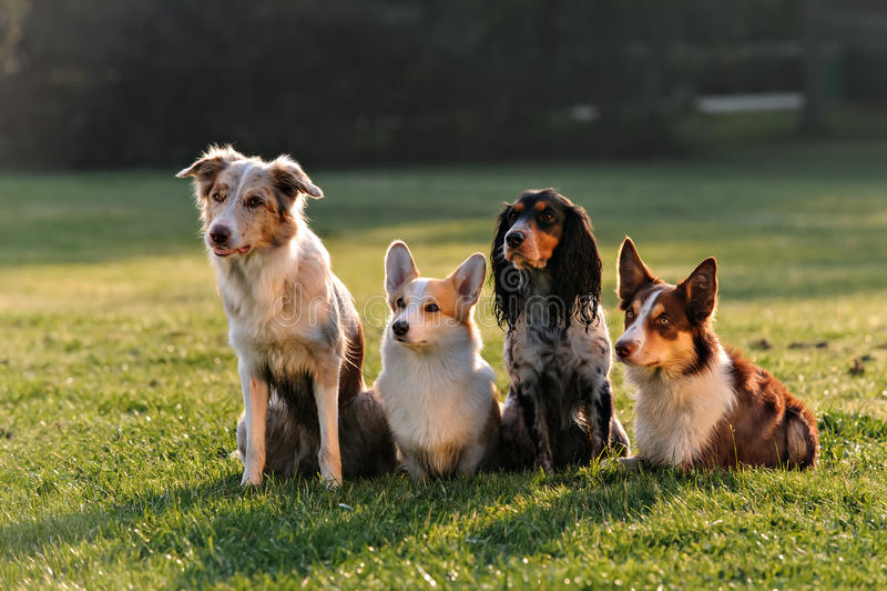 Cuatro perros que se sientan en el parque foto de archivo