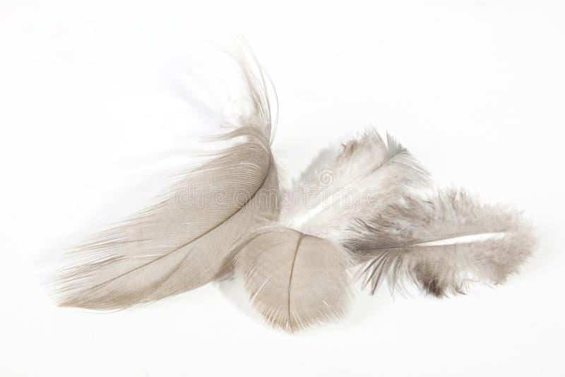Cuatro plumas texturizadas finas ligeras mullidas en blanco fotografía de archivo