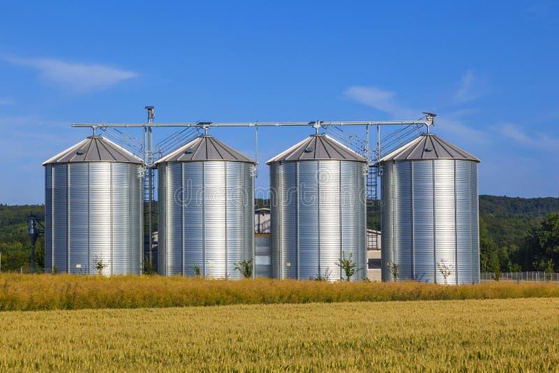 Cuatro silos de plata en campo de maíz imágenes de archivo libres de regalías