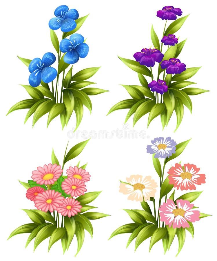 Cuatro sistemas de flores florecientes stock de ilustración