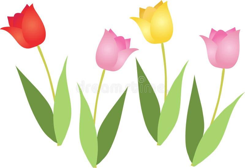 Cuatro tulipanes libre illustration