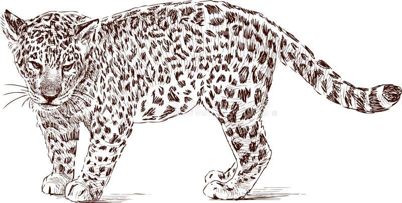 Cub del leopardo ilustración del vector