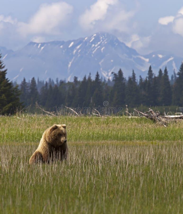 Cub e montagne di orso fotografia stock