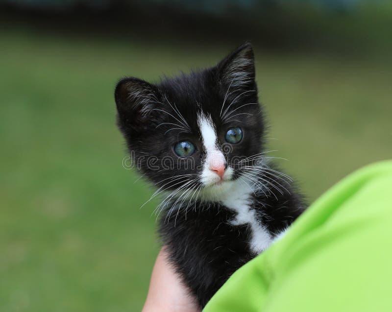 Cub kitten stock images
