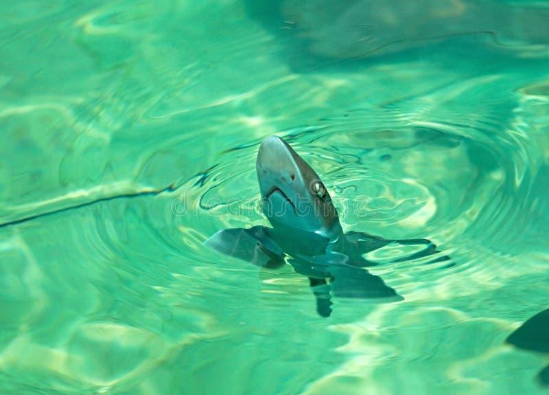 Download Cub shark stock photo. Image of shark, water, flies, fish - 21678534