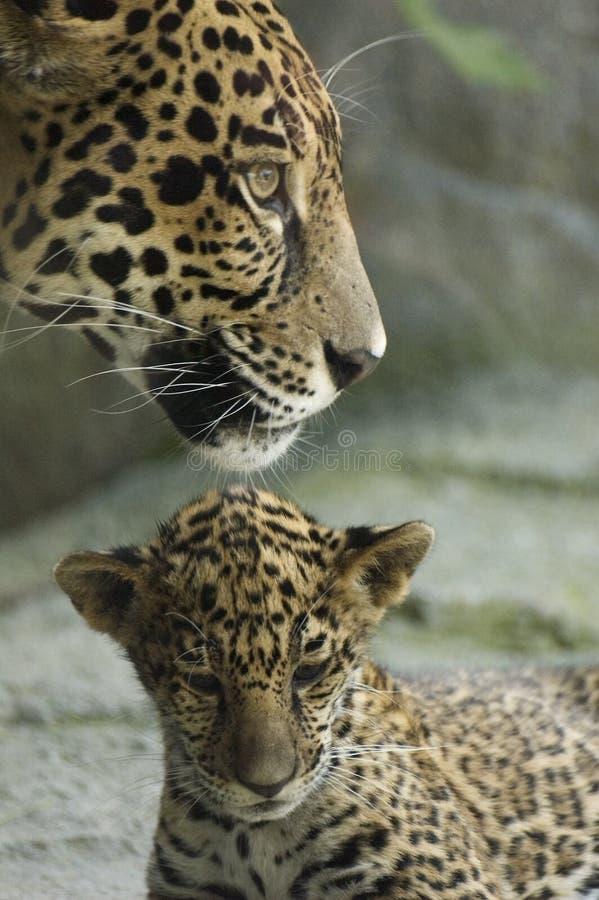 Cub y madre fotos de archivo libres de regalías